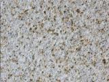锈石厂家批发  黄锈石规格有哪些