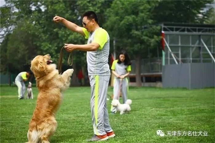宠物狗培训价格 东方名仕 河北宠物狗培训