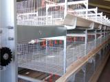 肉鸭笼养设备A现代化笼养鸭自动养殖喂料设备A德州肉鸭笼养技术