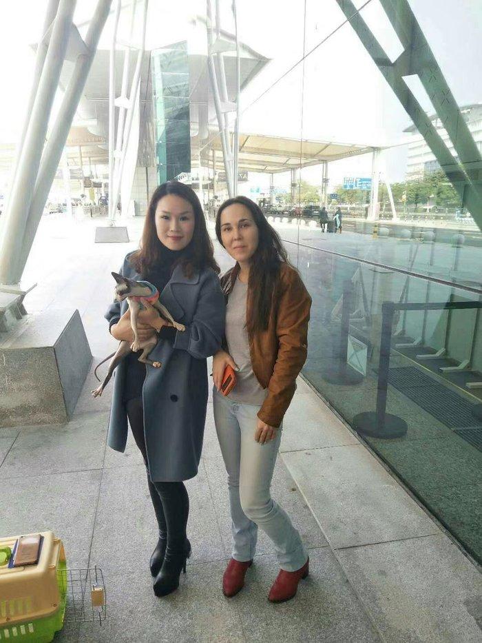 宠物狗托运公司 广东宠物托运 广州帮帮上门接送