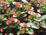 四季草花有哪些,草花种植基地