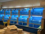 定做海鲜鱼池厂家|酒店海鲜鱼池厂|海鲜鱼池的价格
