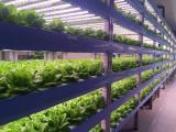 厂家直销LED植物灯蔬菜番茄照明18W