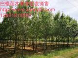 千亩绿化苗木基地