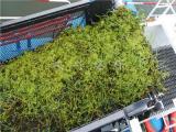水草打捞船 全自动水草收割船 水草打捞机械