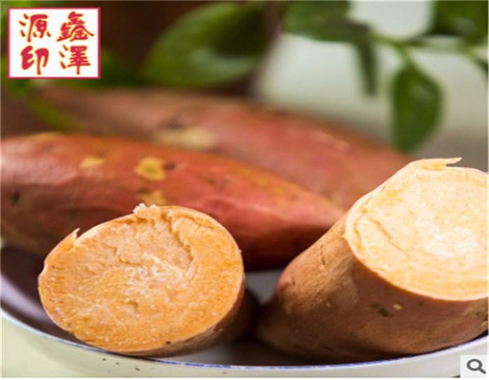 烟薯25号生产厂家 烟薯25号 鑫泽源低价高质