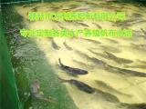 户外室内养殖蓄水池-家庭养殖帆布鱼池-专业定做帆布水池