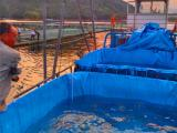 养殖帆布水池专用不价格,无毒无味养殖水池定做价格
