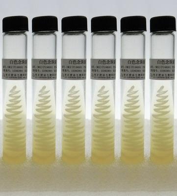 标准菌株(CMCC 标准菌株 优级纯GR 斜面/试管