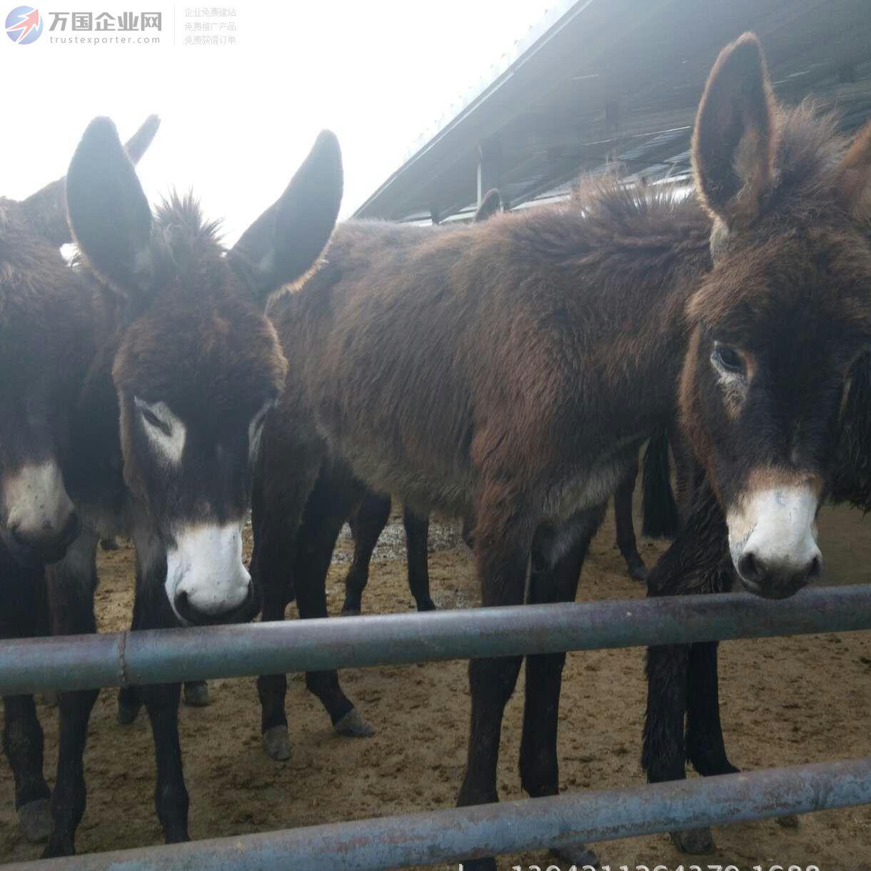 云南驴养殖场驴的价格 母,公